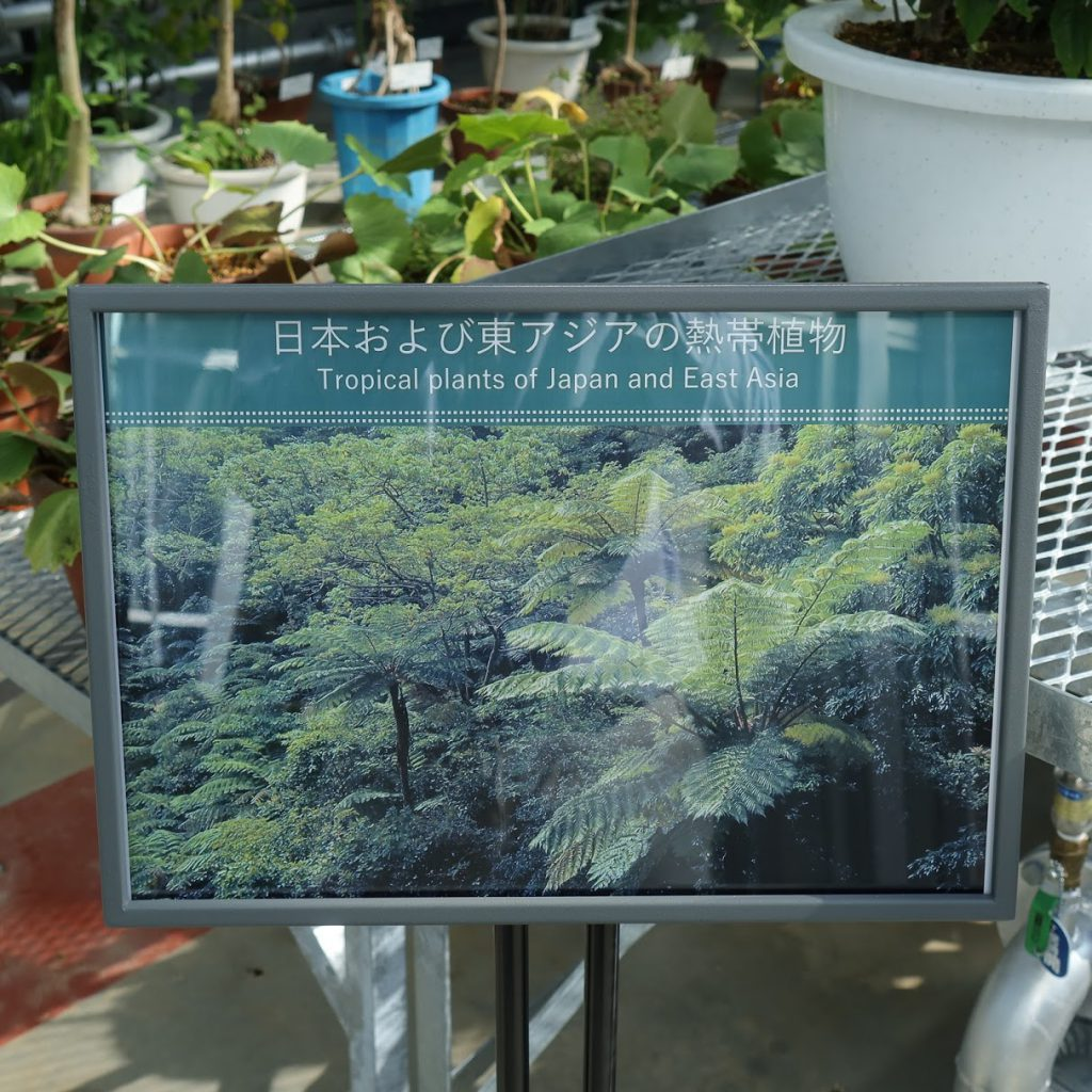 小石川植物園の温室2
