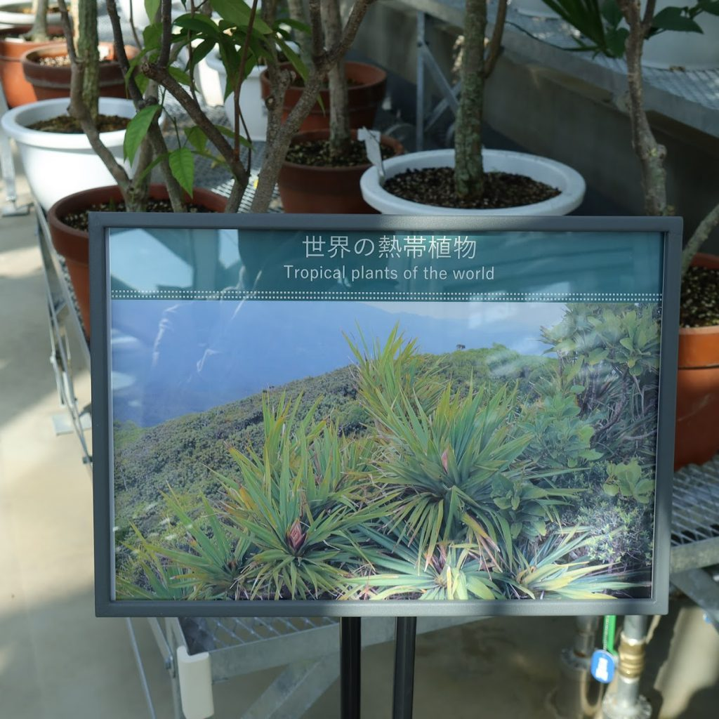 小石川植物園の温室4