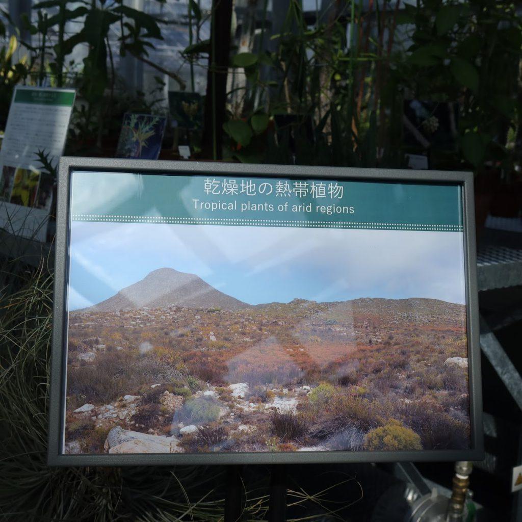 小石川植物園の温室5