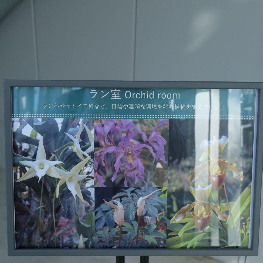 小石川植物園温室6のパネル