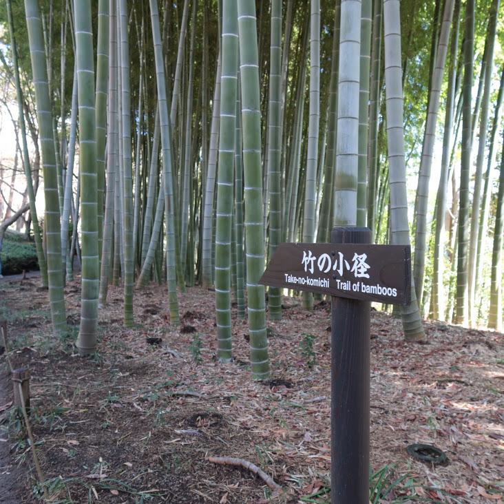 殿ヶ谷戸庭園の竹林