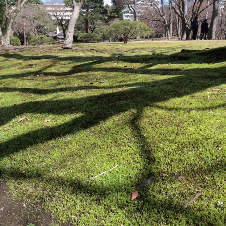 殿ヶ谷戸庭園の芝と苔