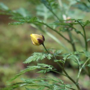 殿ヶ谷戸庭園の花