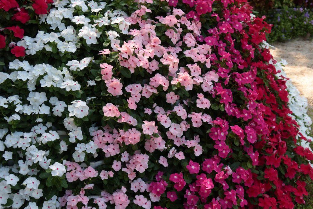 HANA・BIYORIの外の花