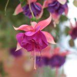 HANA・BIYORIの花たち